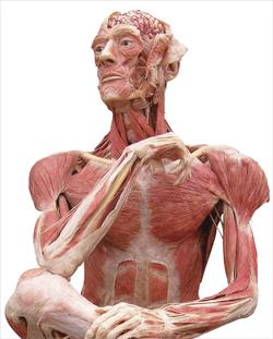 Body Worlds: The Ponderer