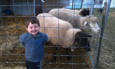 Ben and sheep