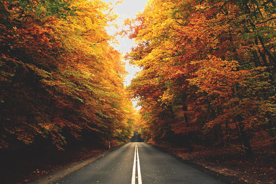 A road cutting through some gold and orange trees in the fall.