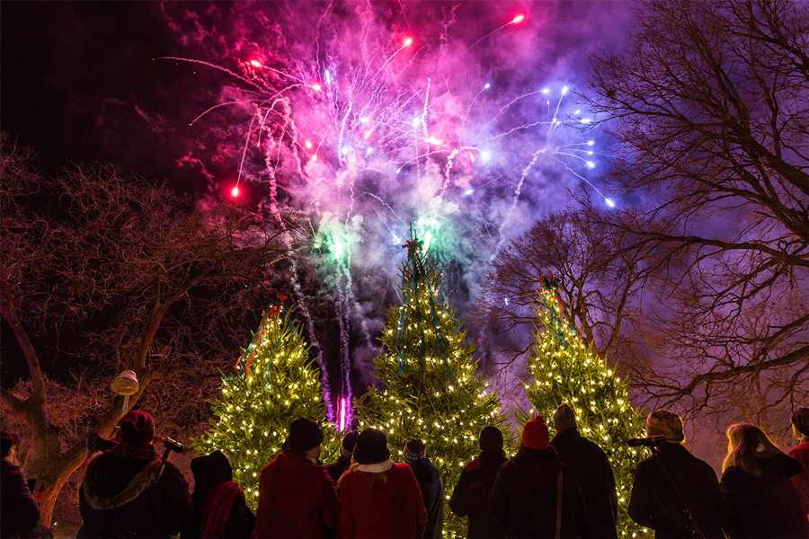 An explosion of fireworks above some decorated evergreens at the Holidazzle.