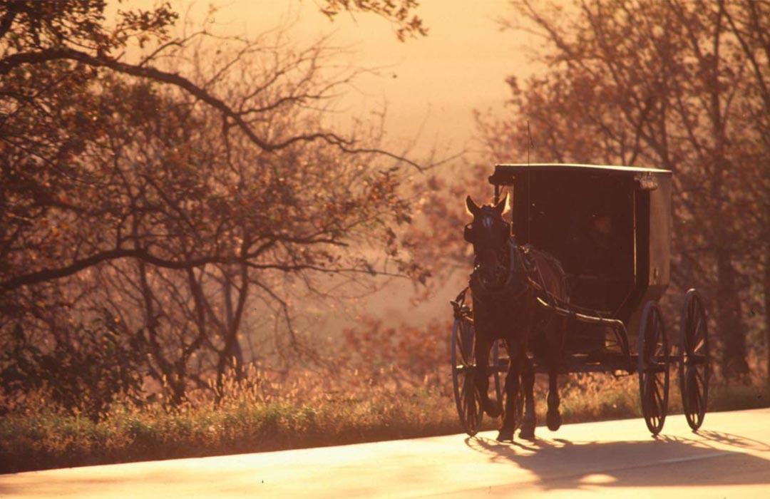 Amish Buggy, Preston, Minnesota.