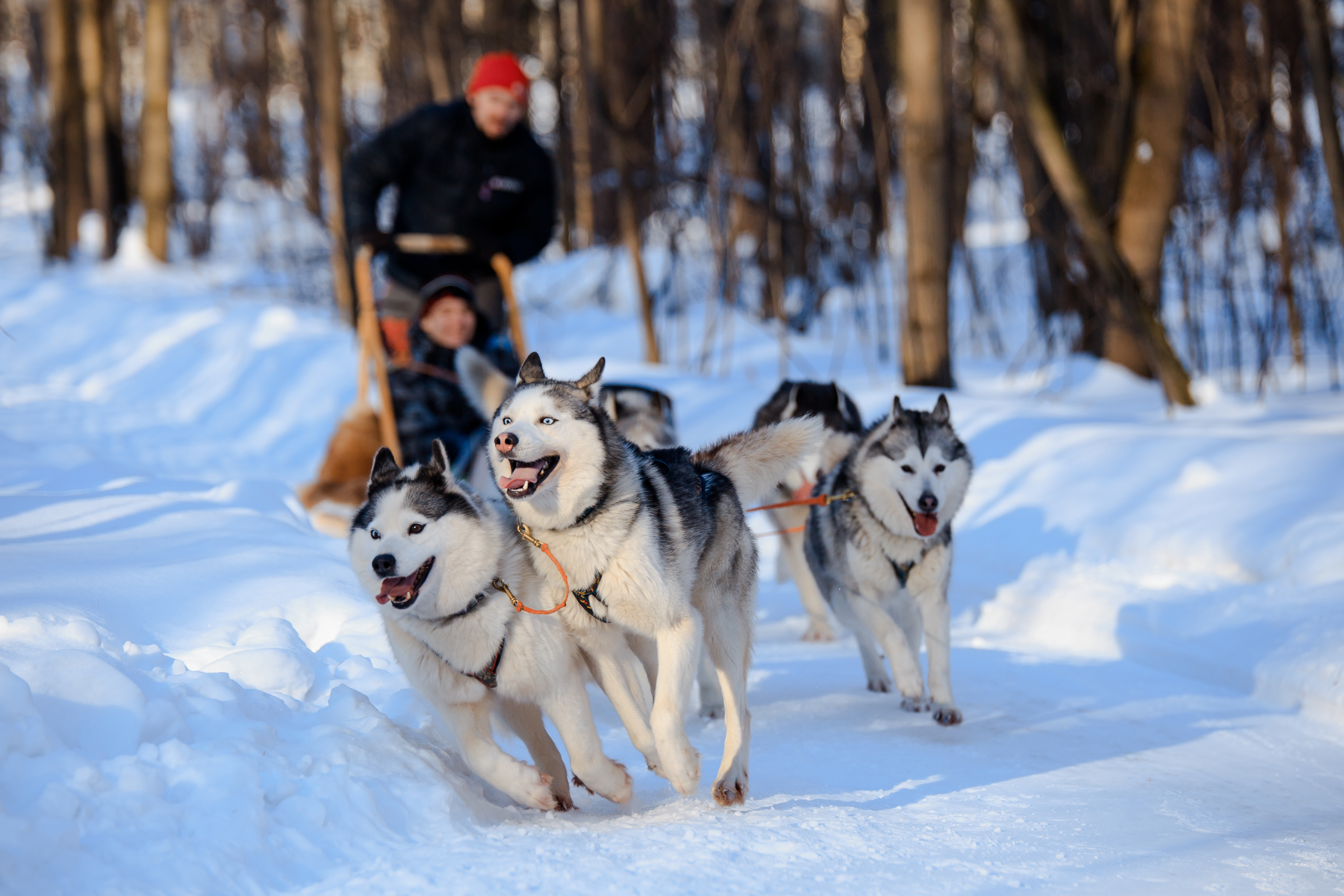 Top 5 Places to Dog Sled in Minnesota | Minnesota Monthly