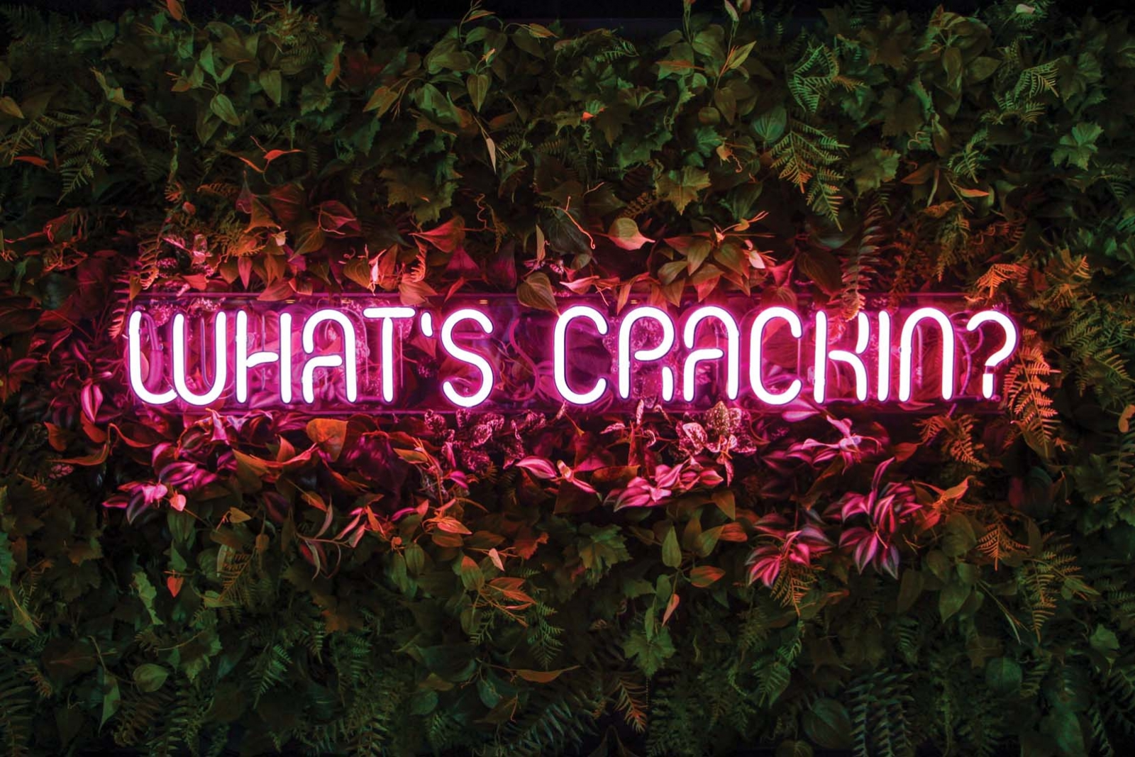 """A neon sign that says """"What's crackin'?"""""""