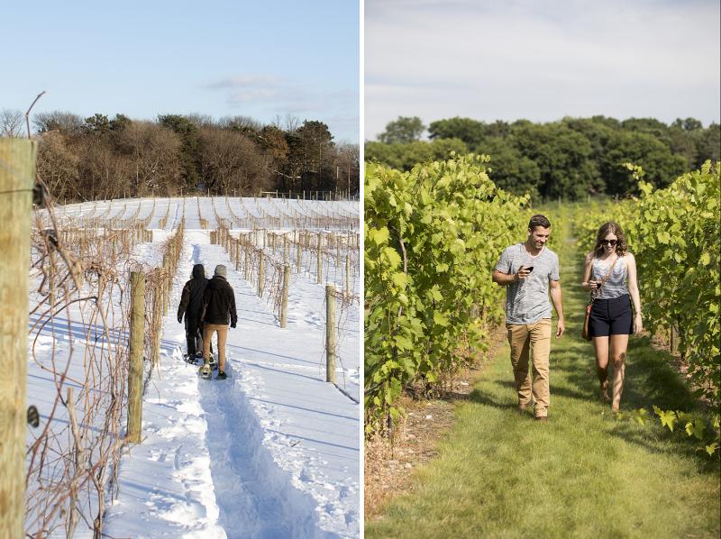 7 Vines Vineyard, winter versus summer