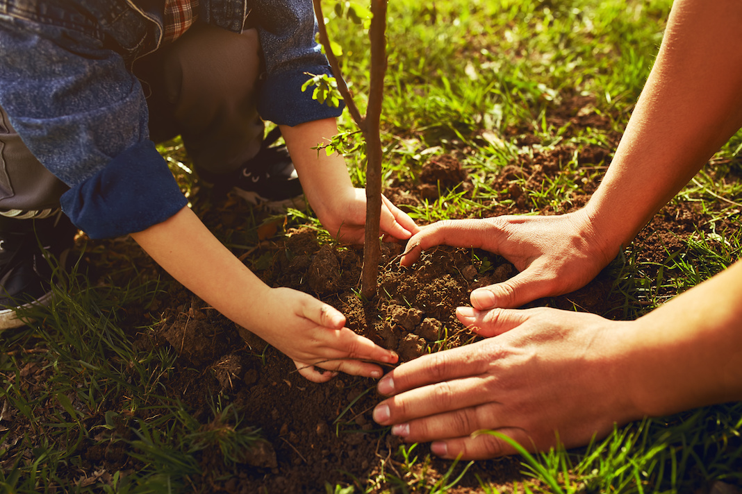 Little boy planting a tree with the help of a parent on Earth Day