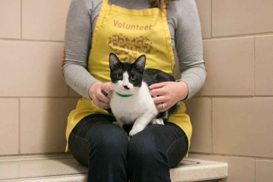 Photo of Animal Humane Society