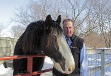 Minnesota Zoo director John Frawley and a clydesdale horse