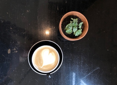 a latte from Farside Coffee next to a little potted plant