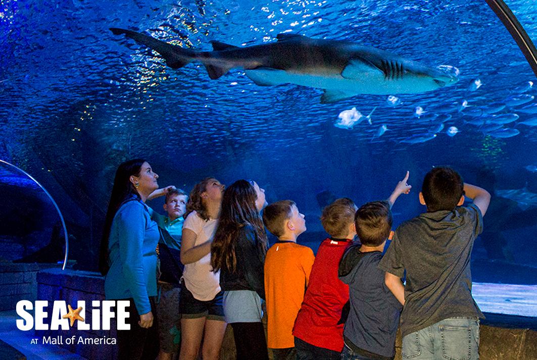 Sea Life at Mall of America
