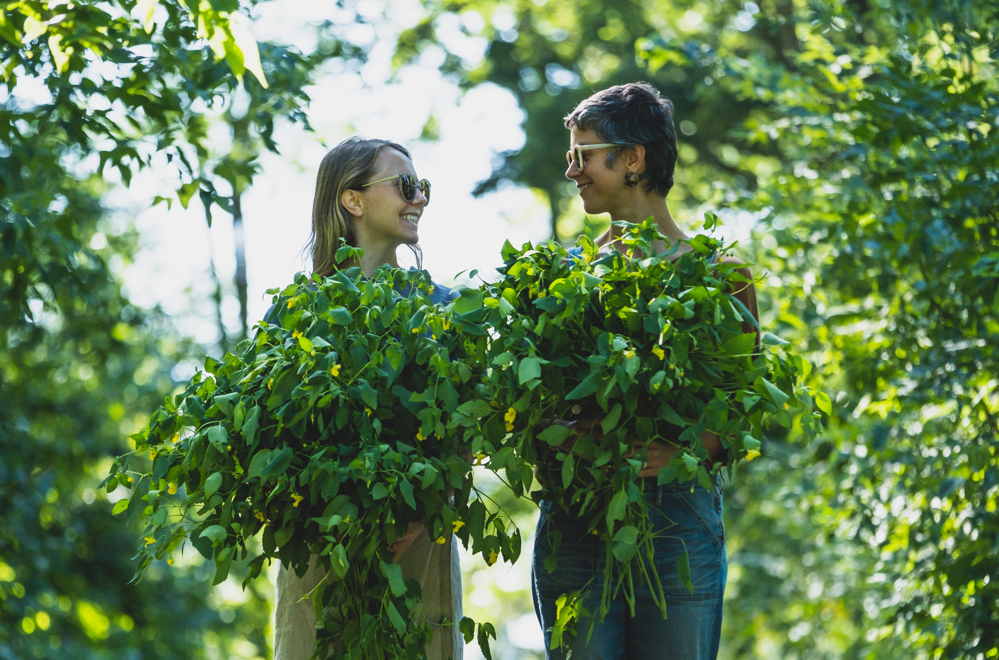 Foraged jewelweed by Hejny and Sardelis