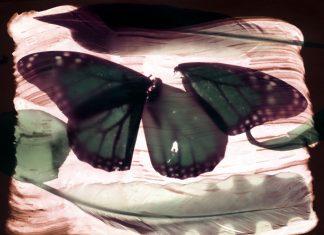 """Blue Monarch,"" John Beaver"