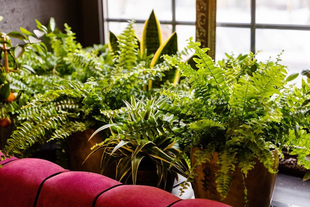 stylish interior filled a lot of plants
