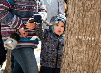Soren Van Luven, 3, of Minneapolis, helps drill a hole for a maple tap during a demonstration of the tapping process at