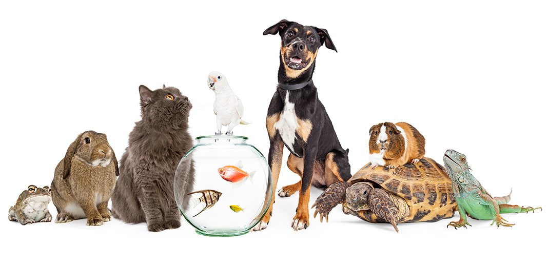 A frog, rabbit, cat, bird, fish, dog, tortoise, guinea pig, and lizard.