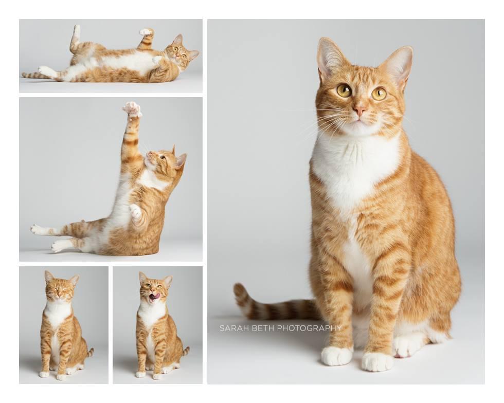 Pet photography with a cat. Sarah Beth Photography.